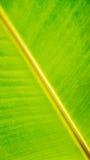 Bananenblatt-Beschaffenheitshintergrund Stockbild