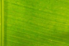 Bananenblatt-Beschaffenheitshintergrund stockfotos