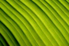 Bananenblatt Diagonallinien der Natur abstrakte grüne Lizenzfreies Stockbild