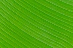 Bananenblatt-Hintergrundbeschaffenheit Lizenzfreie Stockbilder