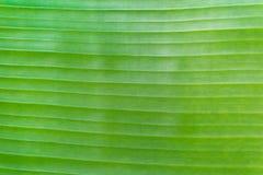 Bananenblatt-Hintergrundbeschaffenheit Lizenzfreie Stockfotos