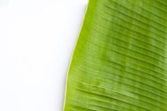 Bananenblatt im weißen Hintergrund Stockfotografie