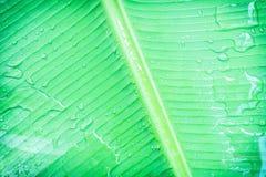 Bananenblatt mit Wasser Stockbilder