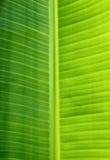 Bananenblattbeschaffenheit Lizenzfreie Stockbilder
