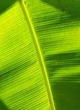 Bananenblattbeschaffenheit Lizenzfreie Stockfotografie
