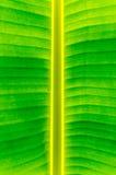 Bananenblattbeschaffenheit und -hintergrund Lizenzfreies Stockfoto