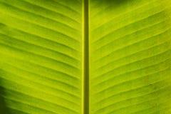 Bananenblatthintergrund Lizenzfreies Stockfoto