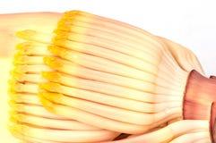 Bananenblume Lizenzfreie Stockfotografie