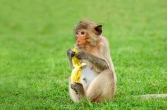 Bananenbruch Lizenzfreie Stockfotos