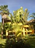 Bananenbusch. Lizenzfreies Stockbild