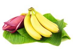 Bananenfrüchte mit Blüte Stockfotos