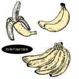 Bananenillustration 1 lizenzfreie abbildung
