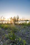 Bananenkraut auf Hintergrund der untergehenden Sonne Stockfotos