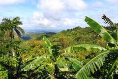 Bananenpalme Fotografía de archivo libre de regalías