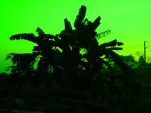 Bananenstaude mit grünem Hintergrund Lizenzfreie Stockfotografie