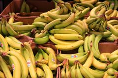 Bananentrauben stockfoto