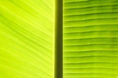Bananenurlaubhintergrund Lizenzfreies Stockbild