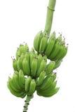 bananer royaltyfria bilder
