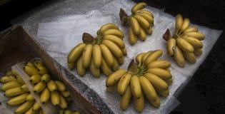 Bananer för dam Finger, sockerbananer, mer sucrier, ninos, bocadillos, fikonträdbananer eller datumbananer Fotografering för Bildbyråer