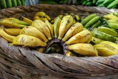 Bananer i en stor korg Royaltyfri Fotografi