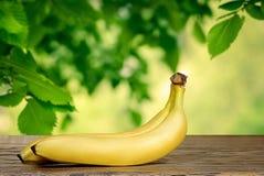 Bananer i trädgården Royaltyfria Bilder