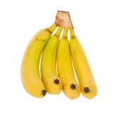 bananer samlar ihop isolerat Royaltyfri Bild