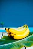 bananer samlar ihop moget tropiskt Royaltyfri Fotografi