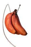 bananer samlar ihop rött moget Royaltyfria Foton