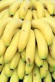 Bananes Image stock
