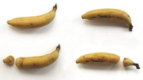Bananes cassées et intactes sur le fond blanc Images stock