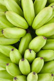 Bananes d'or crues vertes sur la nourriture saine de fruit de Pisang Mas Banana de fond blanc d'isolement Images libres de droits
