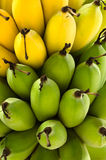 Bananes mûres vertes et jaunes crues Photos stock