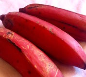 Bananes rouges Photo stock