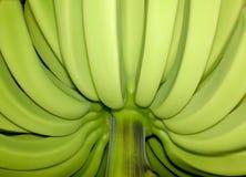Bananes sans tache non mûres photos stock