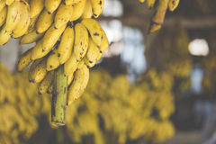 Bananes sur le marché Image stock