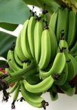 Bananes vertes verticales Image stock