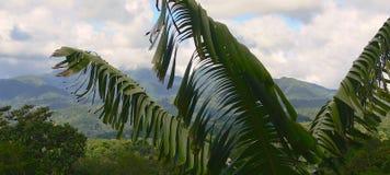 Bananeto e foresta pluviale Fotografia Stock Libera da Diritti