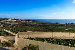 Bananeto sull'isola di Tenerife Immagine Stock Libera da Diritti