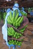 Bananfabrik i Costa Rica som är karibisk Arkivfoto