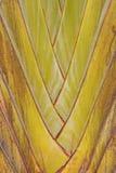 Bananier Images libres de droits