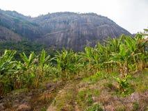 Bananlantbruk med ett berg i bakgrunden royaltyfri foto