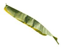 Bananleaf. Royaltyfria Foton