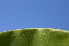 bananleafen gömma i handflatan Royaltyfri Fotografi