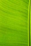 bananleaves royaltyfri bild