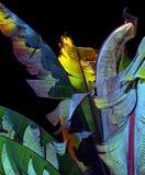 bananleaves Royaltyfri Fotografi