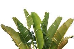 Banano e foglia Immagini Stock Libere da Diritti