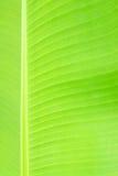 Bananowa liść tekstura Obrazy Royalty Free
