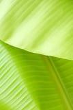 Bananowa liść tekstura Zdjęcie Stock