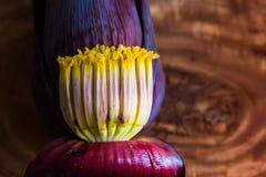 Bananowa okwitnięcie mokka, kwiaty niedojrzały banan w drewnianym tle z kopii przestrzenią dla teksta zdjęcia stock