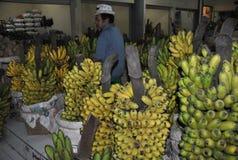 Bananowa owoc Obraz Royalty Free